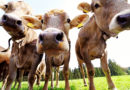 Beef Prices Rise in Response to Demand in Asia