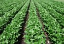 Low Commodity Prices Add Stress to Tight Farm Budgets