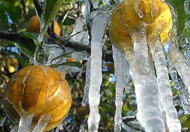 Texas Farmers, Ranchers, Reel from Winter Blast